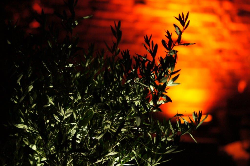 Image for Luximprint Outdoor Lighting web pages showing Olive tree with illuminated wall in the back