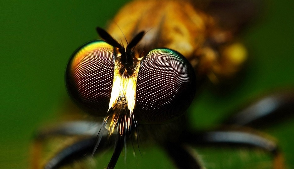 Macro close up of a fly's eye that serves as inspiration for a 3D printed fly's eye lens array