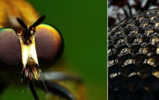 Header image showing fly's eye from a macro lens and printed fly's eye lenses