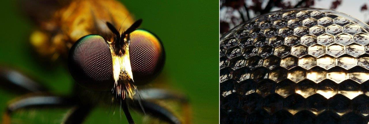 Stunning Spring Footage: Biomimicry and Organic Optics Designs